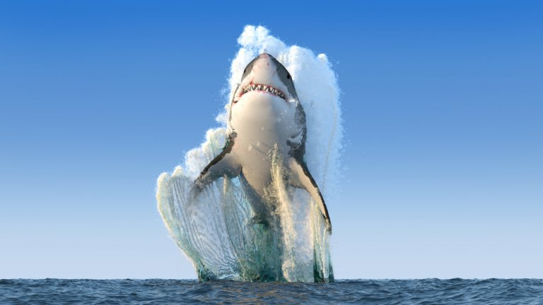 SEO Shark beautifully breaches the ocean water