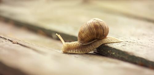 A snail that symbolizes slow websites