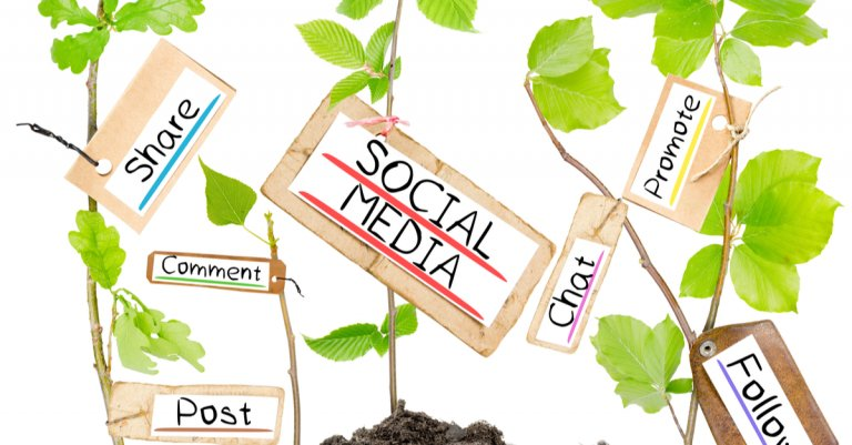 growing plants with social media terms